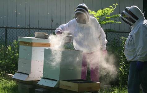 Haulenbeek keeps as busy as a bee